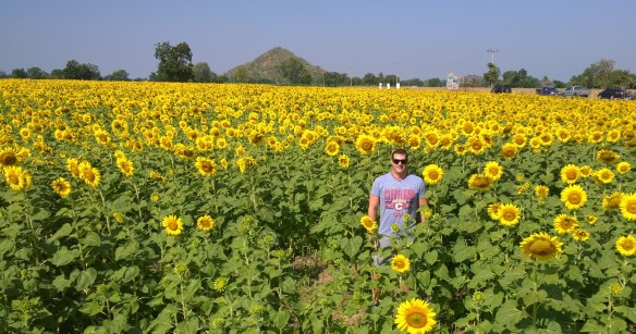 See if you can find me in the sunflowers