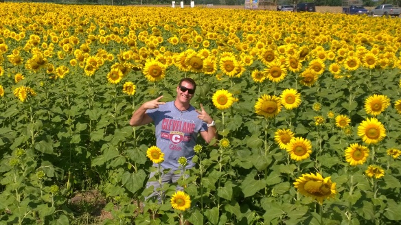 Being cool in the sunflower fields