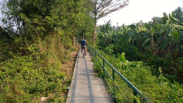 Path along a large banana plantation